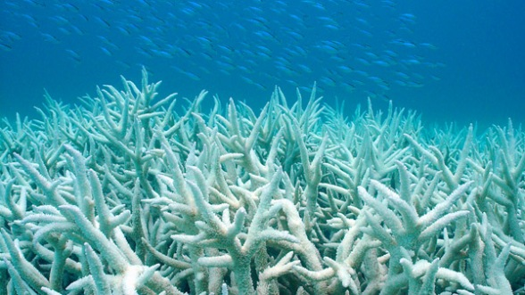 coral-bleaching_pic